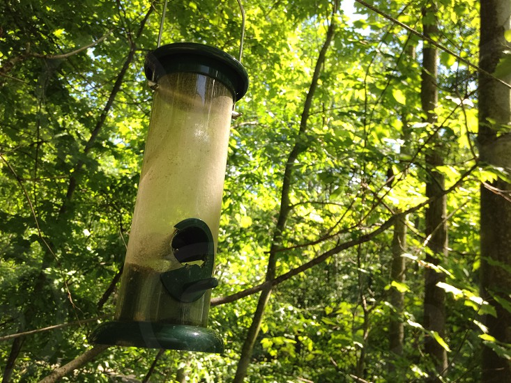 A picture of a bird feeder photo