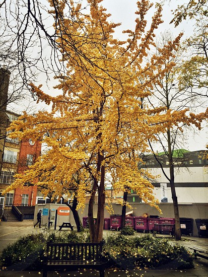 yellow leafed trees photo