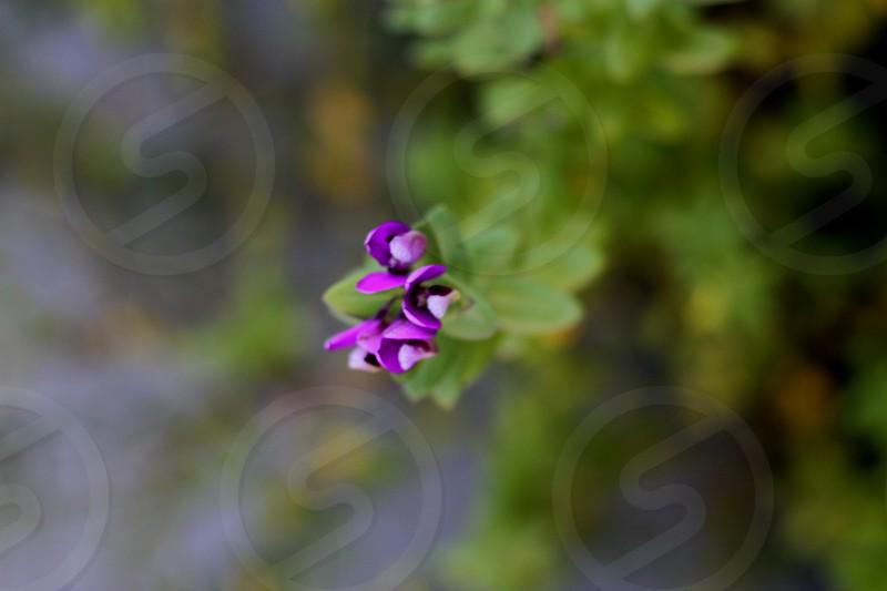 Tiny flowers photo