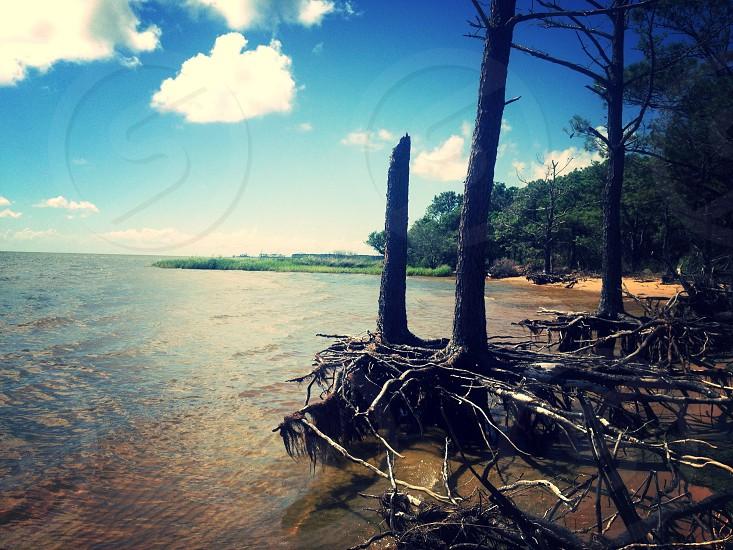 driftwood on beach shore under blue sky photo