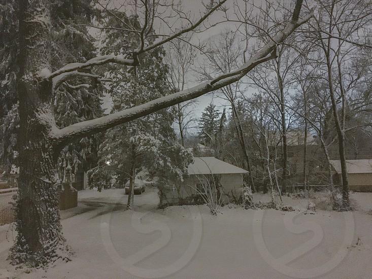 gray bare tree with snow near snow topped hou se photo