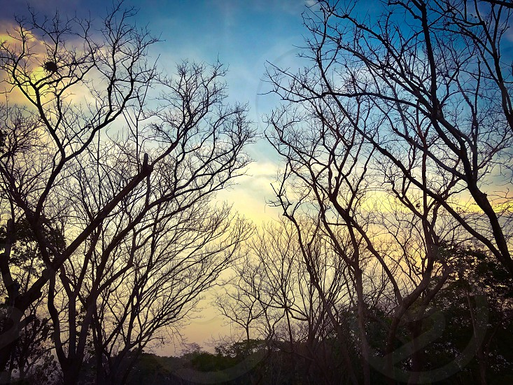 tree branch fall falls autumn leafless season dry sky cloud blue background dead death sad sorrow solitude calm silence lifeless still empty end fallen  hopeless desperate nature weather photo