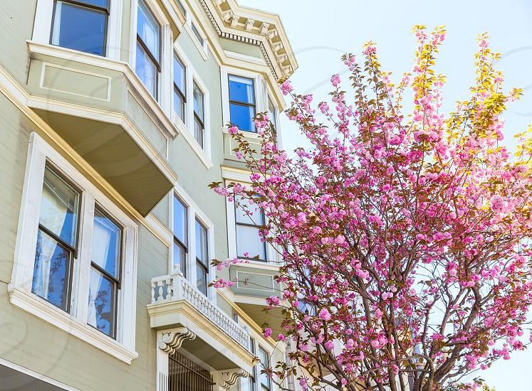 San Francisco Victorian houses near Washington Square California USA photo