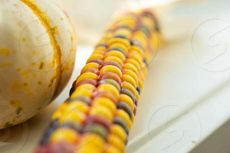 A closeup shot of a pumpkin and Indian corn decor on a window sill. photo