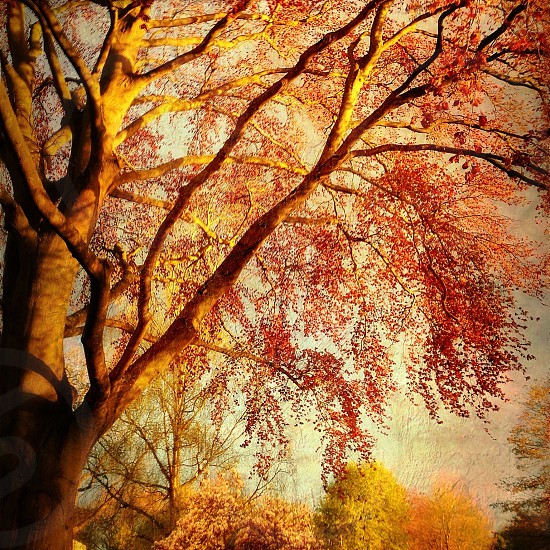 brown tree during autumn  photo