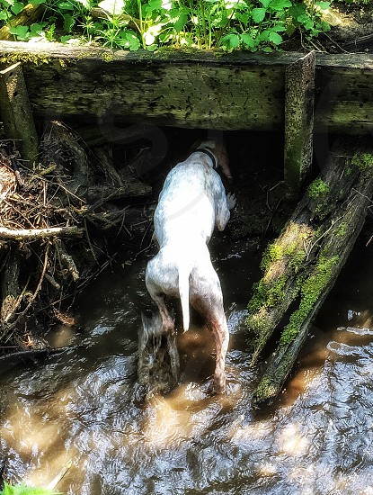 photo of white dog inside a tunnel photo