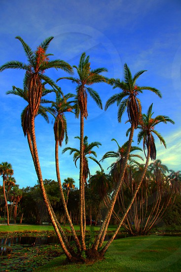 palm tree cluster photo
