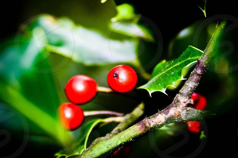 Tiny berries photo