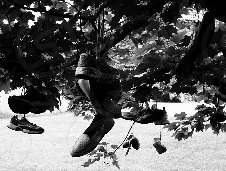 shoe tree branch sneaker leaves leaf photo