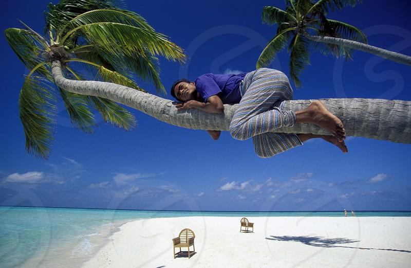 Der Traumstrand mit Palmen und weissem Sand an der Insel Velavaru im Southmale Atoll auf den Inseln der Malediven im Indischen Ozean.  photo