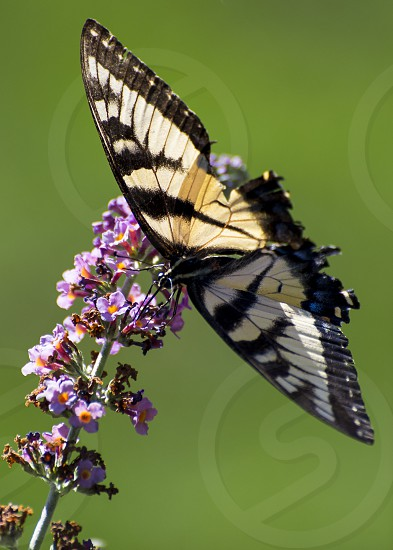 Garden butterfly flying around plants.  Outdoor flowers peaceful relax photo