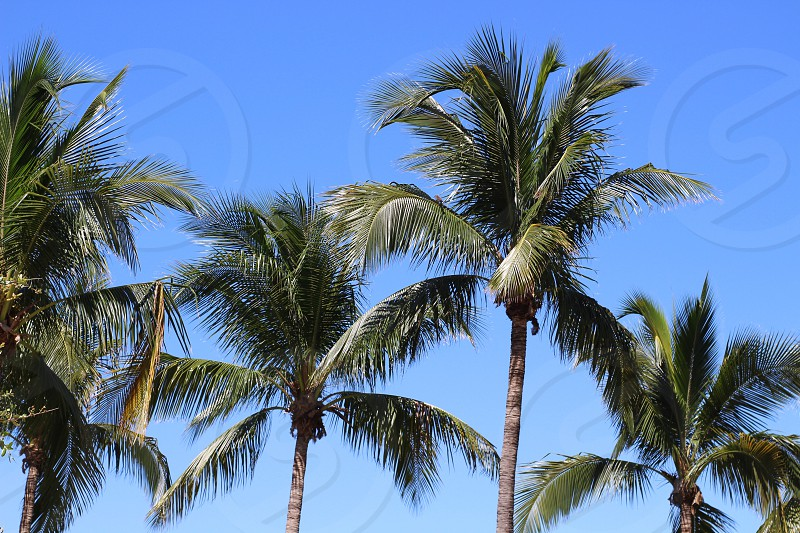 Florida Livin' photo