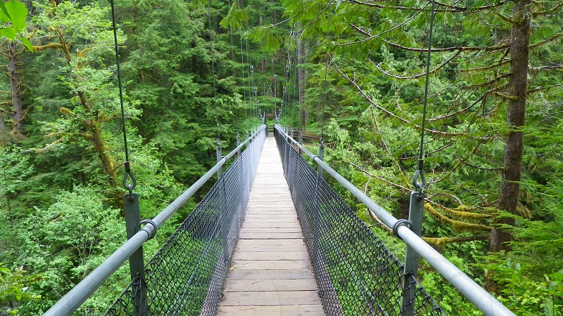 Coastal Rain Forest Suspension Bridge photo