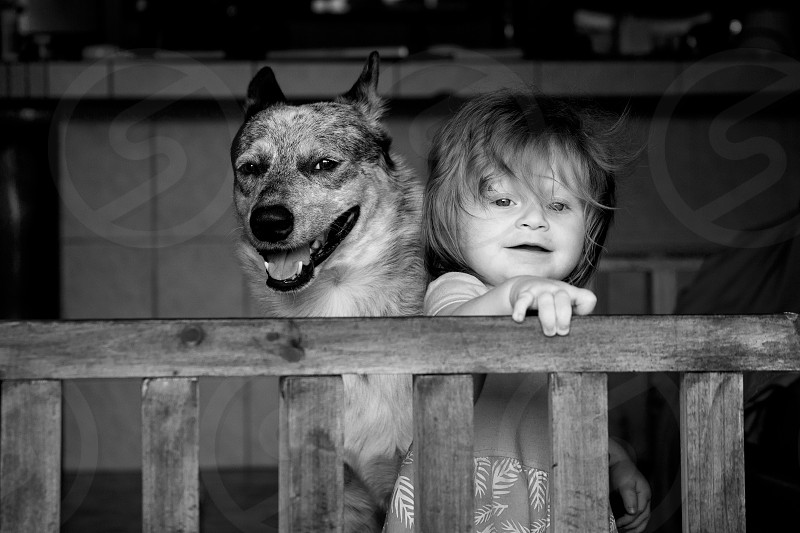 Photo of an Australian Cattle Dog (Blue Heeler) playing with a little girl. photo