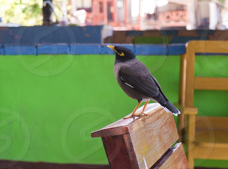 Curious wild bird at beach caffe. photo