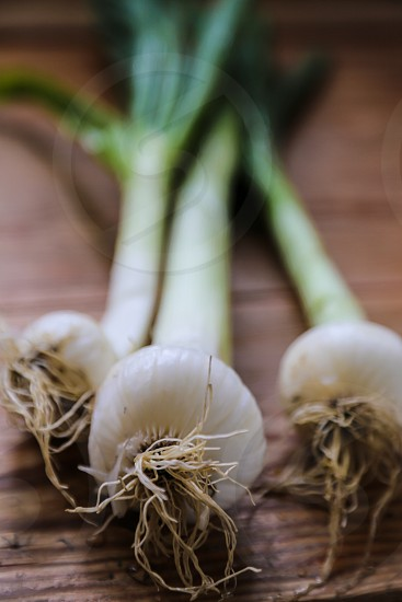 Onion onions food raw vegetable vegetables growth harvest healthy photo