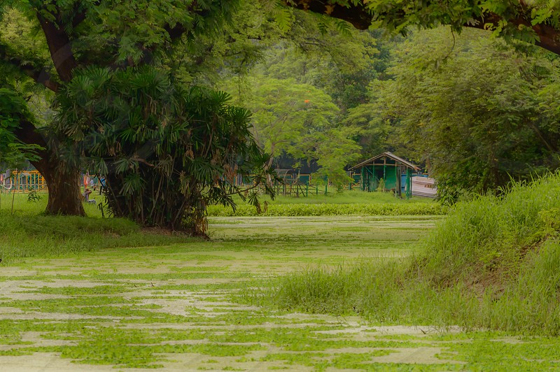 The house is surrounded by plants and trees. View on holiday cabin by a lake. Tiny house near the water. Vacation holiday concept. Goa India. photo