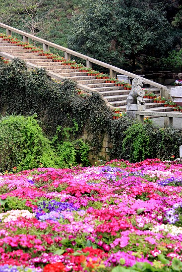 Colors and Stairs photo
