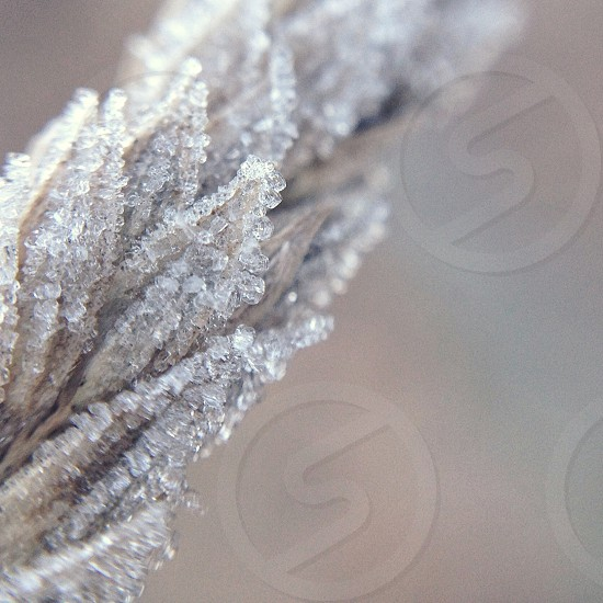 macro shot of frost on nature photo
