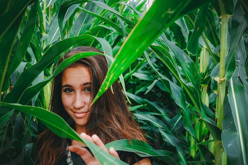 Young pretty girl in a cornfield. photo