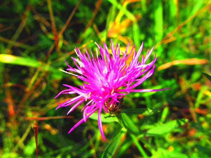 Purple flower macro from local reservoir in western Pennsylvania  photo
