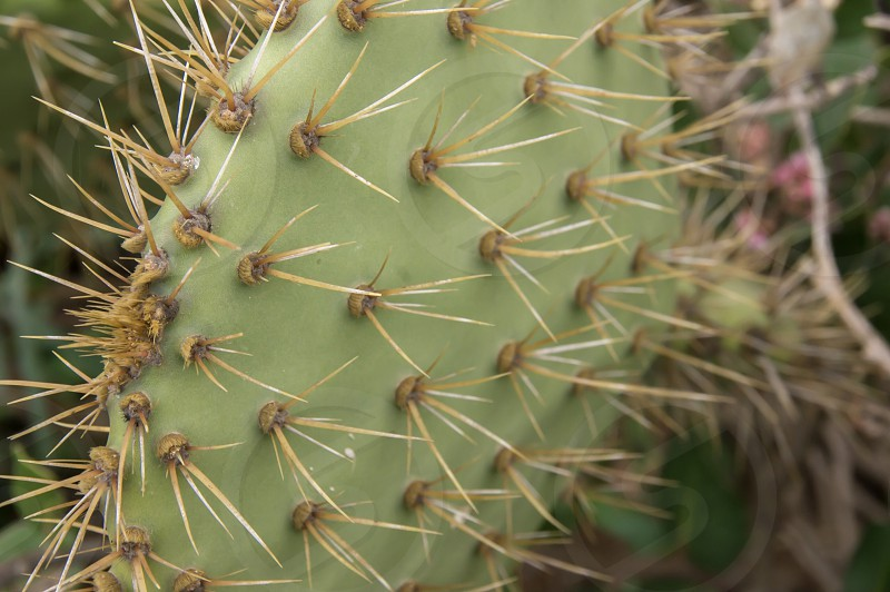 Prickly cactus green photo