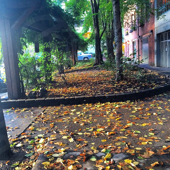Autumn day in Seattle photo