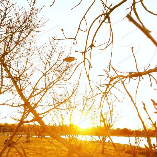 Dusk at Balboa Lake photo