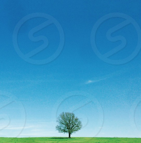 solo green tree on grass against blue sky photo