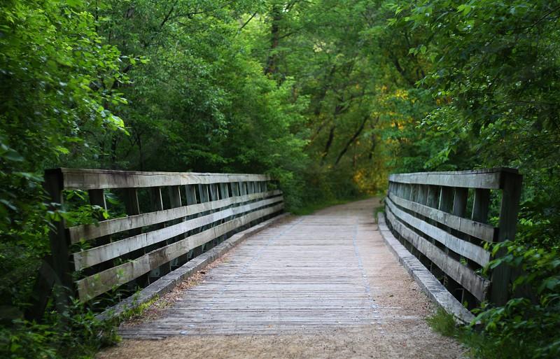 Bridge Lines photo
