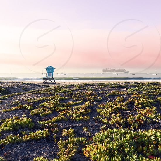 green ice plant growing near a beach with a blue lifeguard tower on it photo