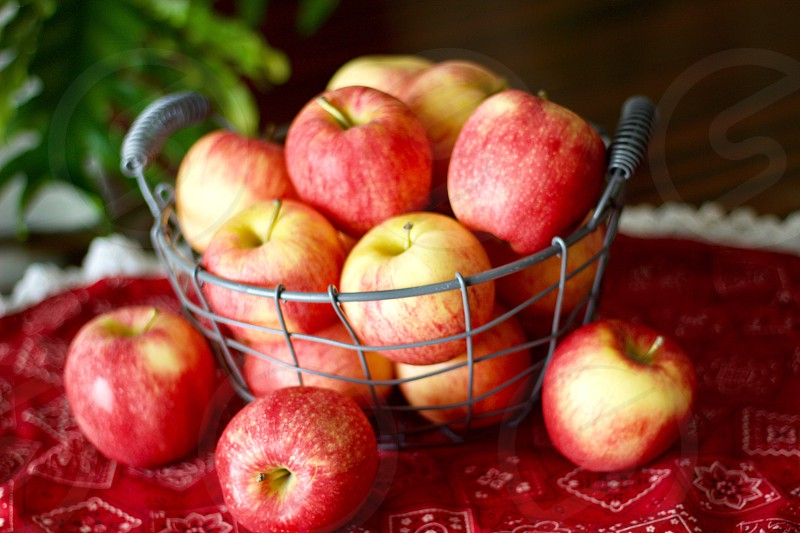 Gala apples in a wire basket on a red bandana-patterned tablecloth with eyelet trim blurred plant in the background  photo