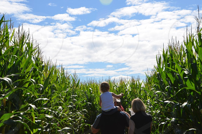 Family walking through corn maze photo