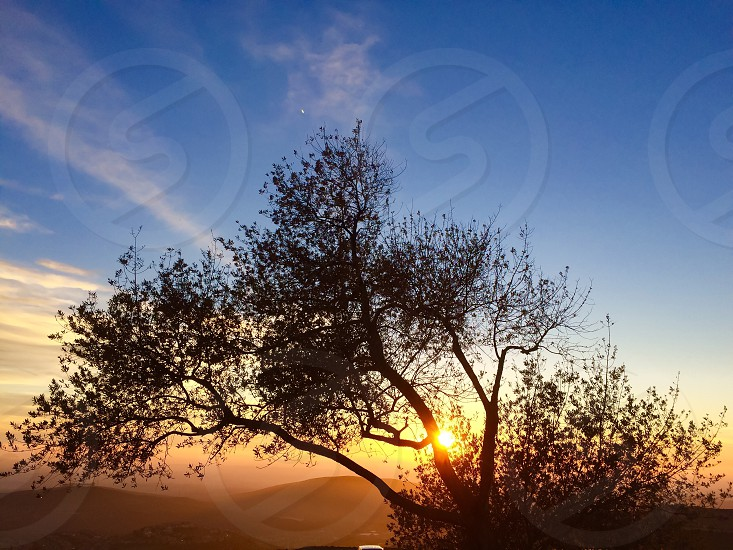 Inspiring. Reflective. Meditative  sunset/sunrise. View of sun over hills through Oak tree. photo