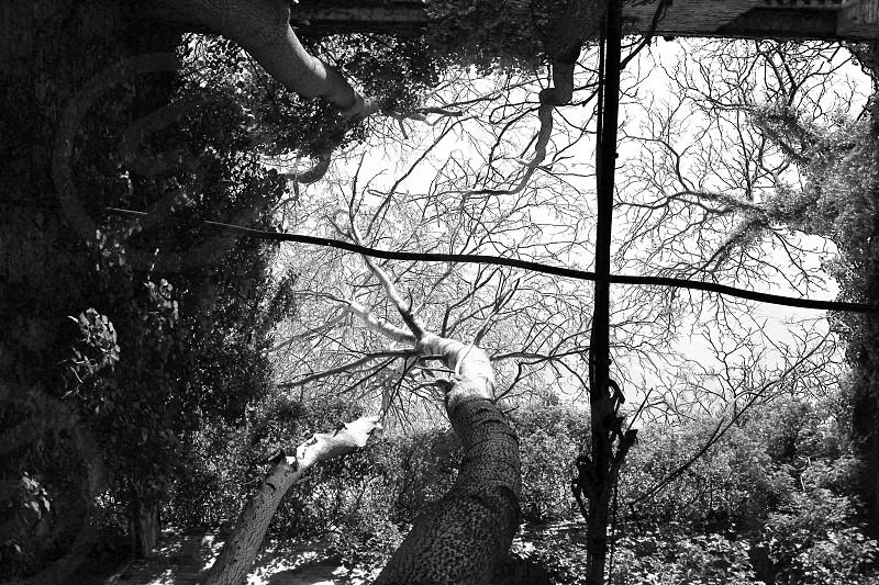 War torn villa Abandoned Steglitz Berlin Trees photo