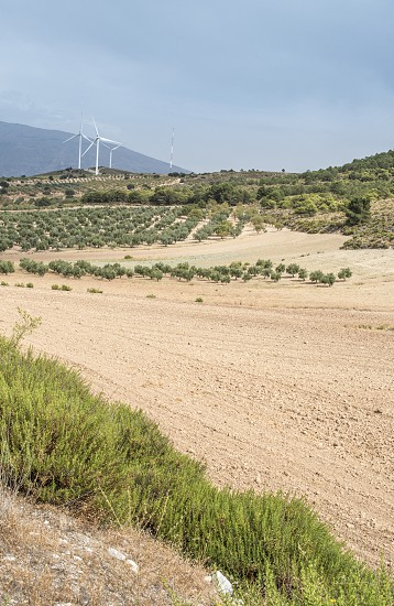 Wind turbines on a hill and olive trees photo