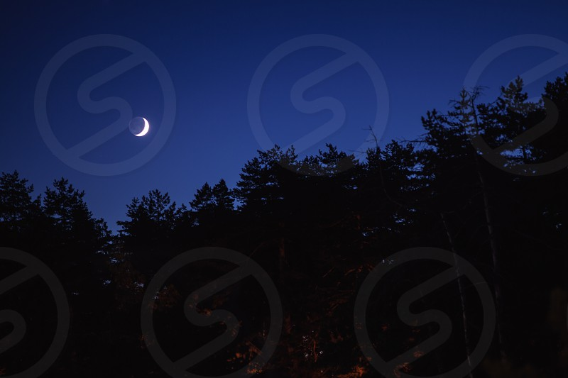 Moon on the sky during night forest in deep black.  photo