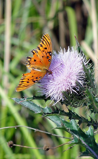 Thistle visitor photo