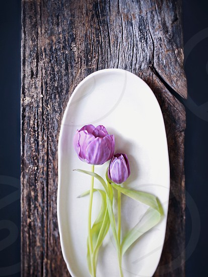 flower on oblong plate photography  photo