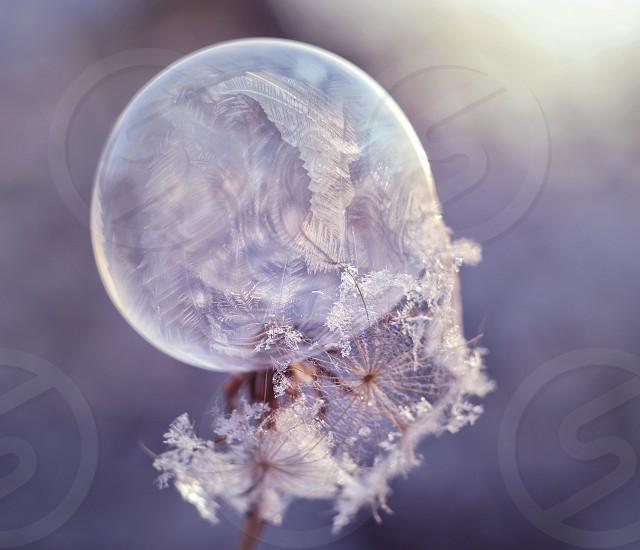 Frozen soap bubble  photo