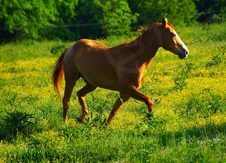 brown horse on green fields photo