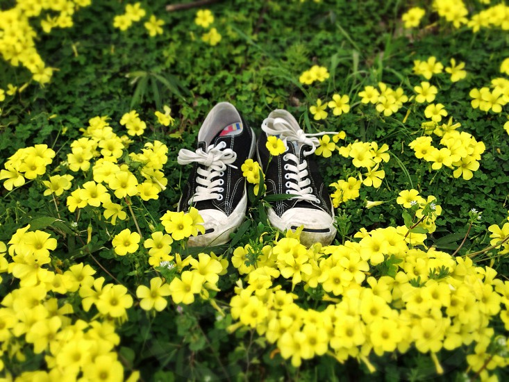black converse in yellow flowers field photo