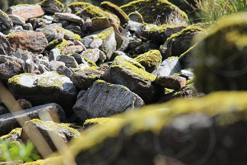 Rocks covered in moss Fox Glacier New Zealand  photo