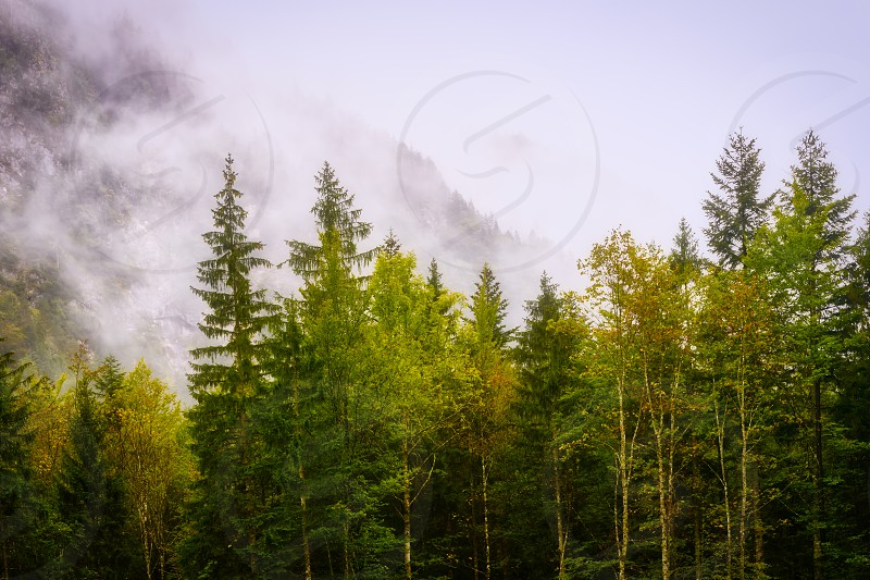 Magical forest in morning light with fog misterious autumn scene fairytale trees photo