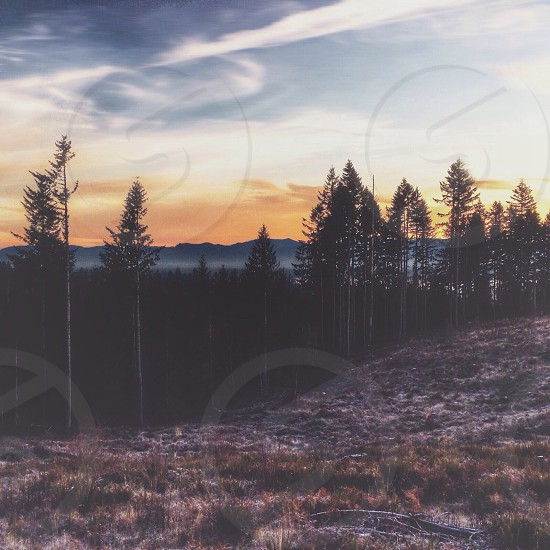 white and brown rolling mountain with pine trees at sunset  photo