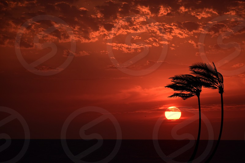 silhouette of 2 palm trees under orange sunset photo