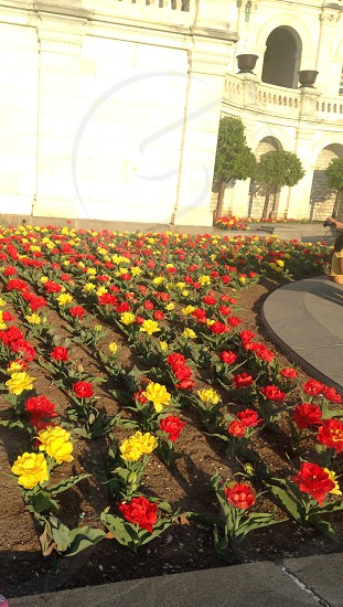 view of a flower garden by a white structure photo