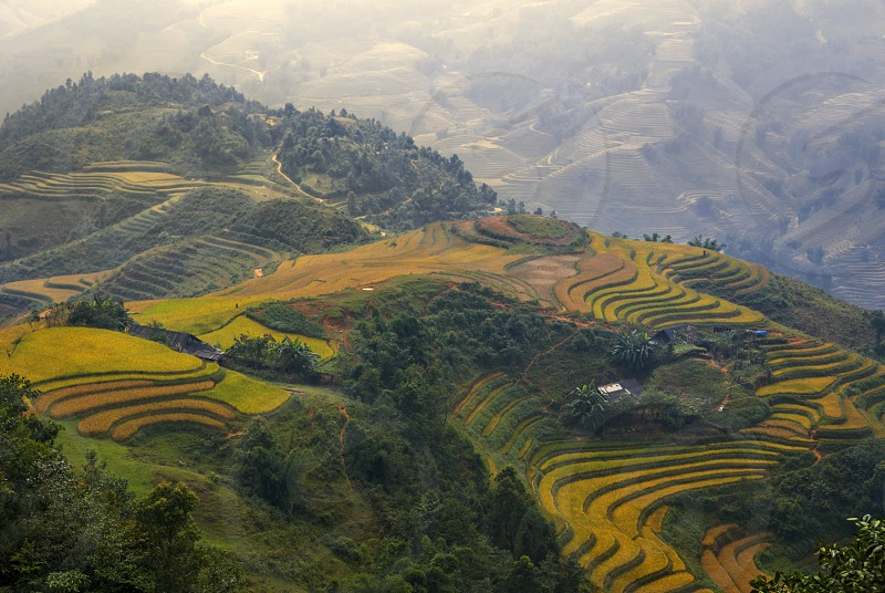Hoang Lien Son Mountains near Sa Pa possibly the most scenic mountain location in Vietnam. The human landscapes of rice cultivation in terraces that follow the natural contours of the escarpments like contour plowing is a classic feature of Hoang Lien Son Mountains. photo