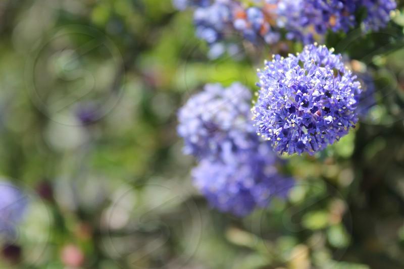 Bright Bold Wild Flower Interest Prosperous Purple   photo