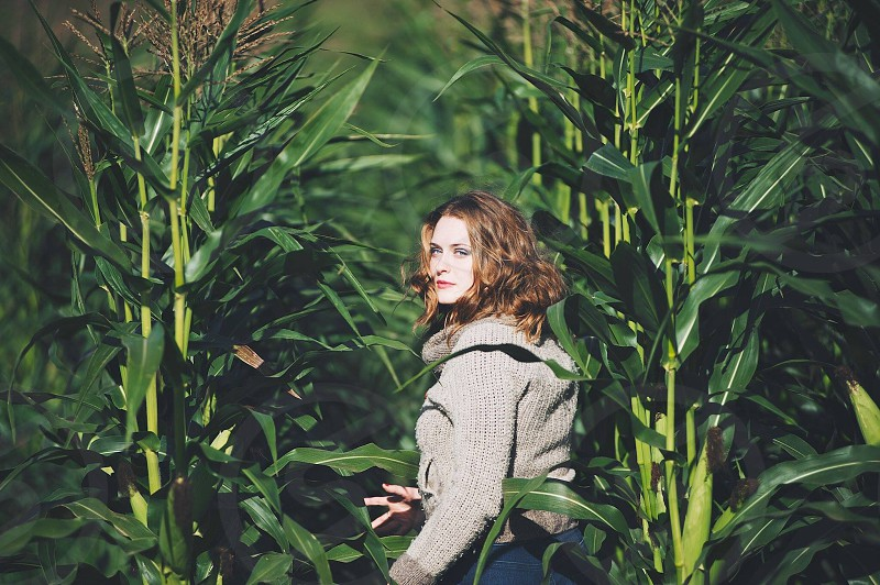 woman on the corn field photo